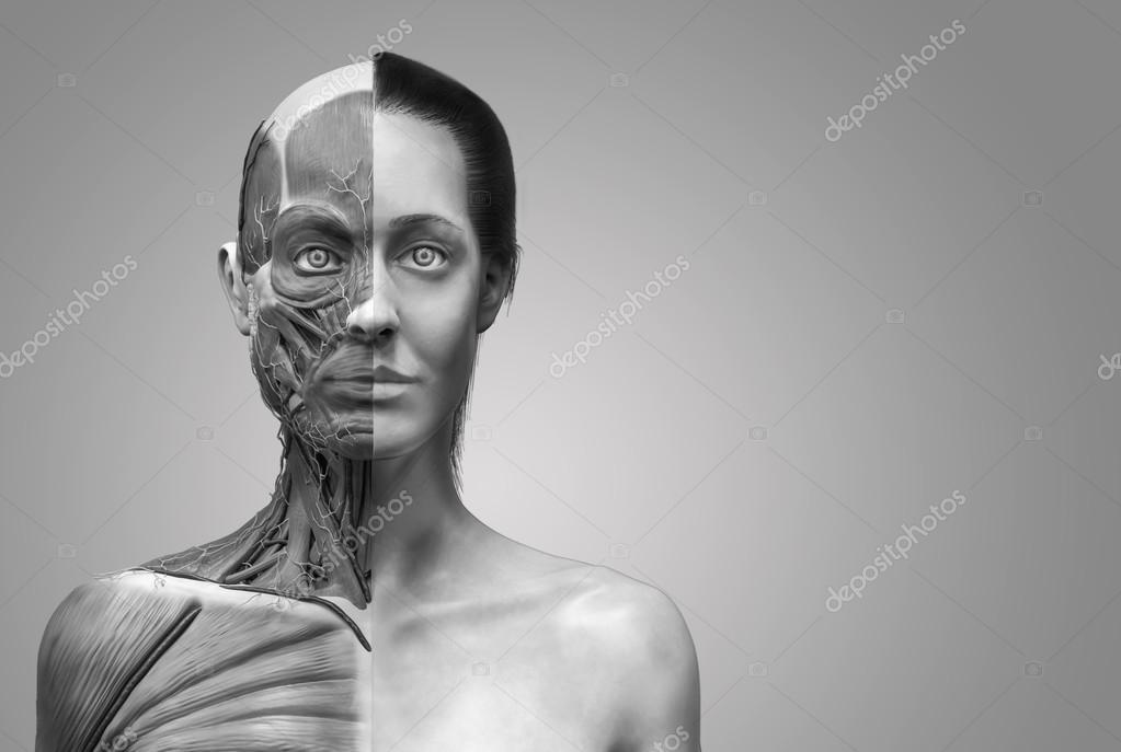 Menschliche Anatomie der weiblichen — Stockfoto © abidal #120077924