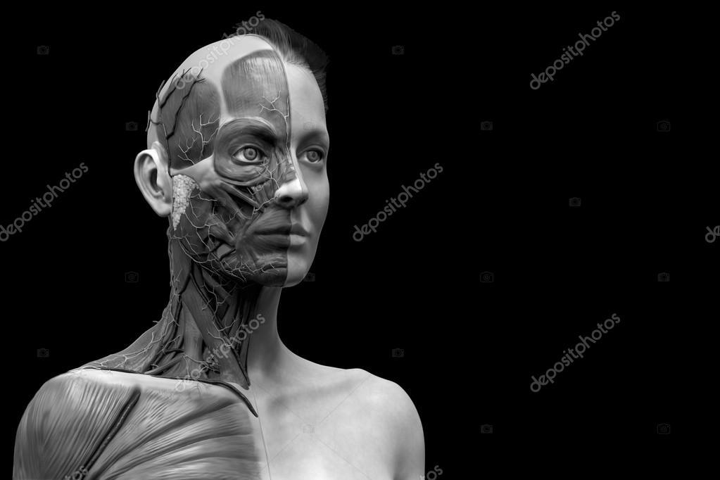 Menschliche Anatomie der weiblichen — Stockfoto © abidal #120078260