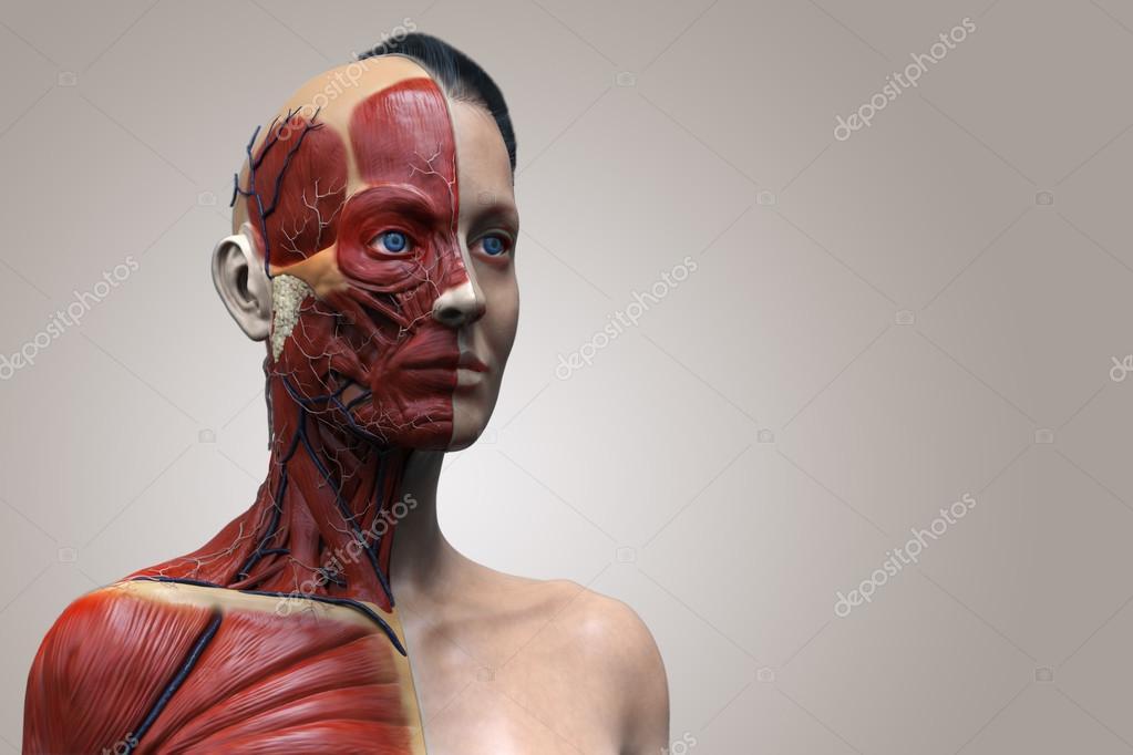 Menschliche Anatomie Modell einer Frau — Stockfoto © abidal #120078592