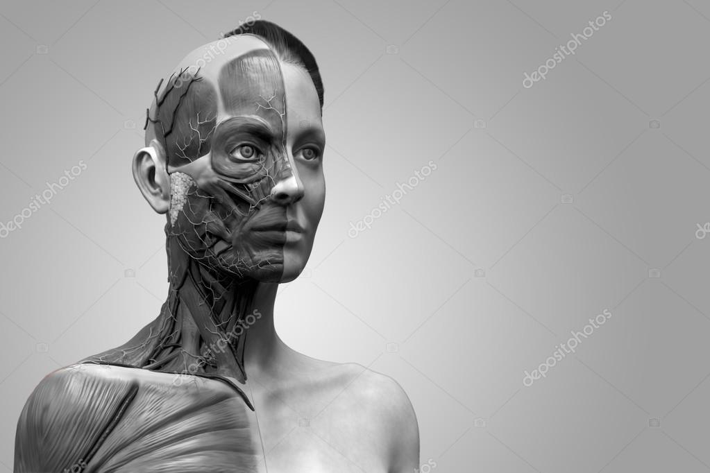 Menschliche Anatomie der weiblichen — Stockfoto © abidal #120078666