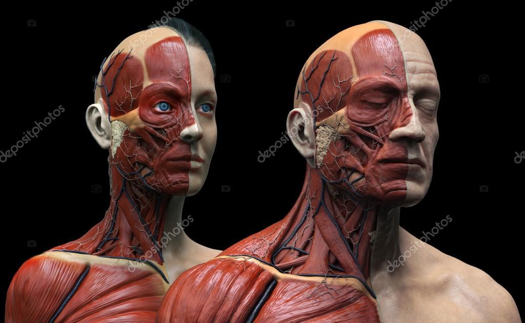 Menschliche Anatomie Hintergrund, männlich und weiblich — Stockfoto ...