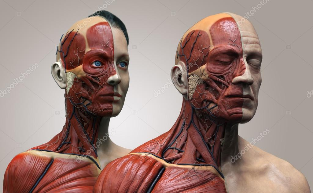 Human anatomy background , male and female — Stock Photo © abidal ...