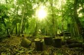 bella foresta di mattina
