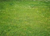 pozadí zelené trávy