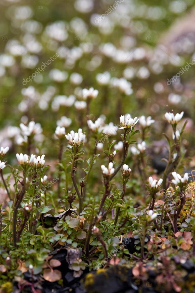 Pequenas Flores Silvestres Blancas Fotos De Stock C Xalanx 105945566