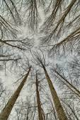 Fotografie Podíváme se v lese