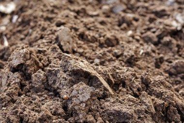 Fertile plowed soil