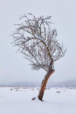 Lonely tree on snowy field