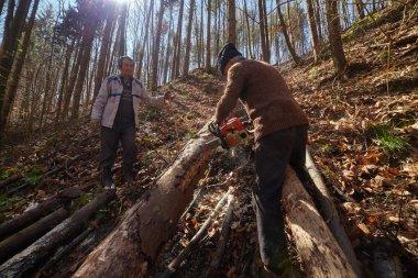 Senior lumberjacks cutting trees
