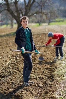 People sowing potato