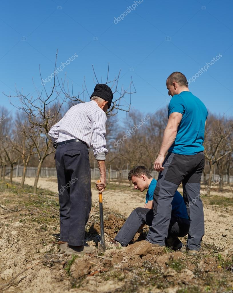 Grandson, father and grandfather planting a plum tree in an orch