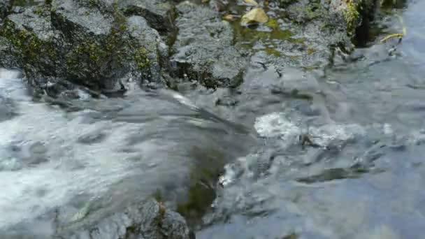 Clear runnig water stream