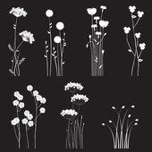 Kvetoucí divoké květy oddělené na černém pozadí