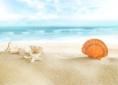 """Картина, постер, плакат, фотообои """"Красочные снарядов на пляже."""", артикул 71517917"""