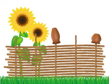 wicker fence of twigs with sunflowers vector illustration