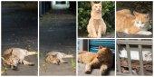 kolekce koček