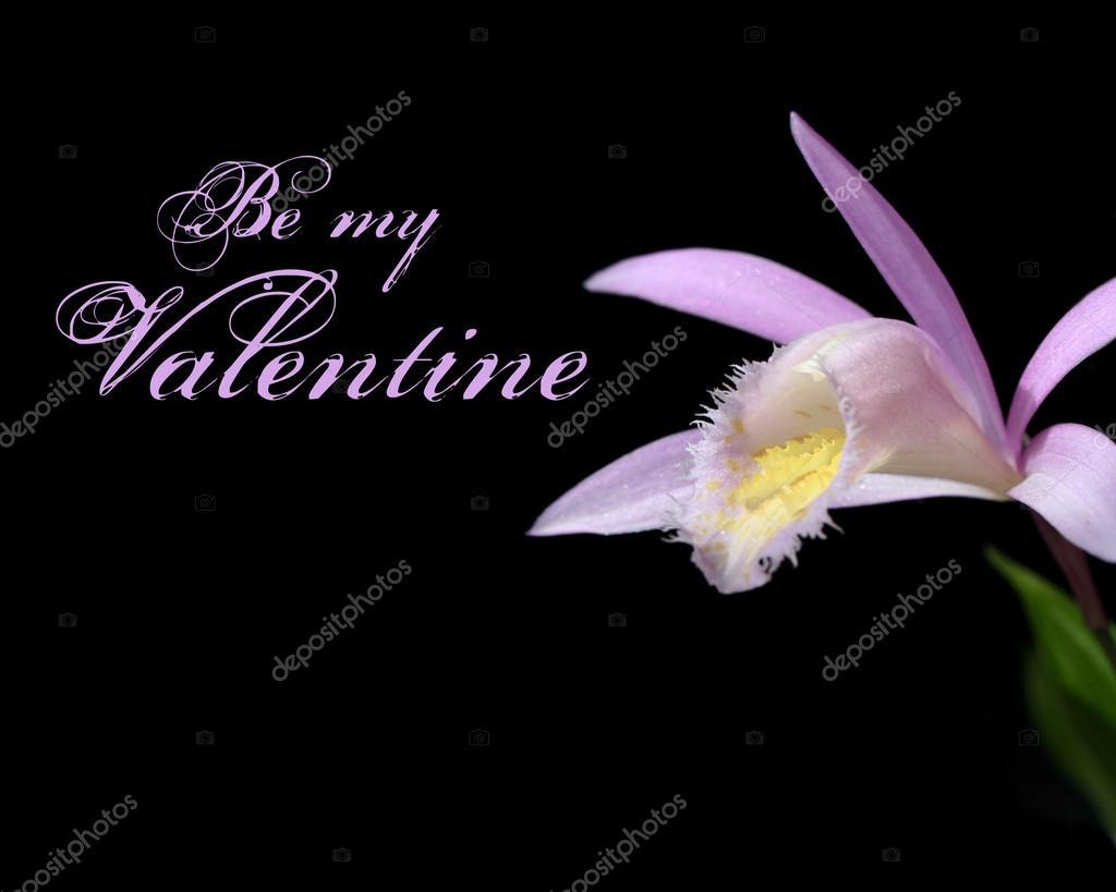 Pink orchid stem on Black