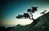 Strom a moře při západu slunce. Krym krajina