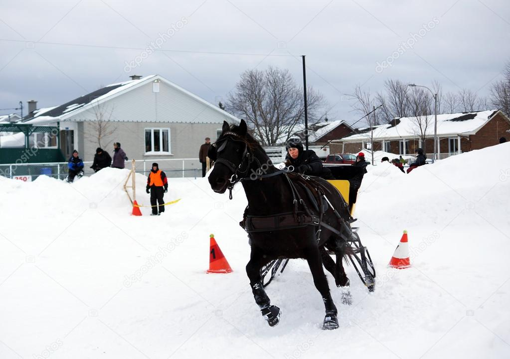 canadian horse pulling sleigh stock editorial photo mirage3