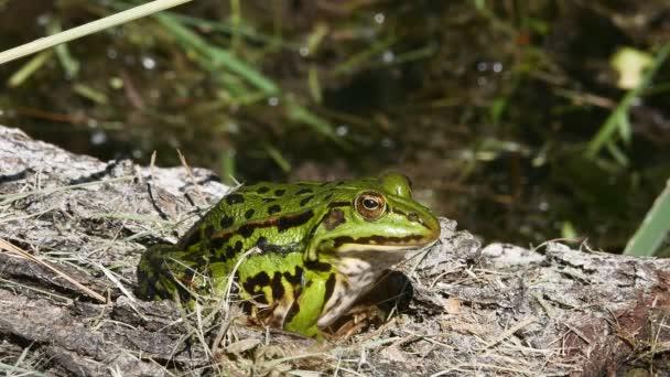 Grüner Frosch am Stamm