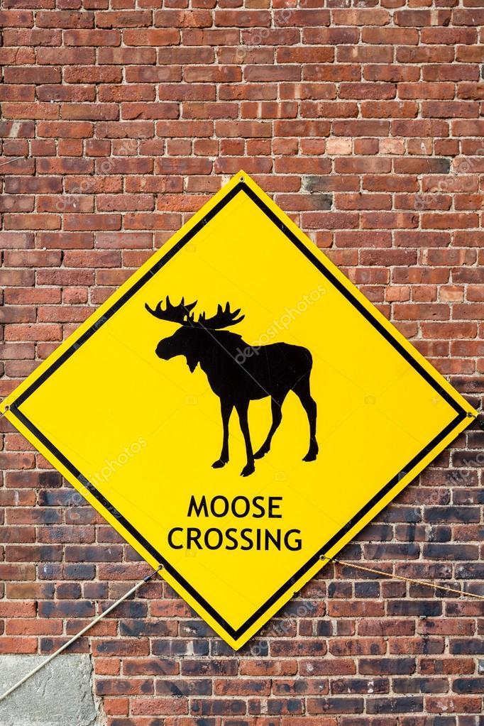 moose crossing sign on brick wall stock photo dbvirago 74405967