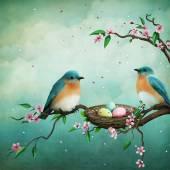 Fotografie blauen Vögel und Eier im nest