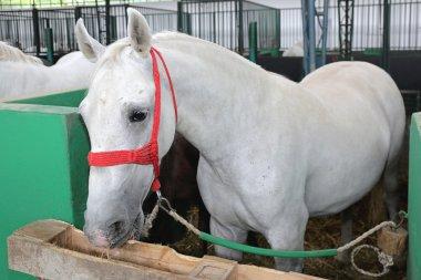White Horse in Box