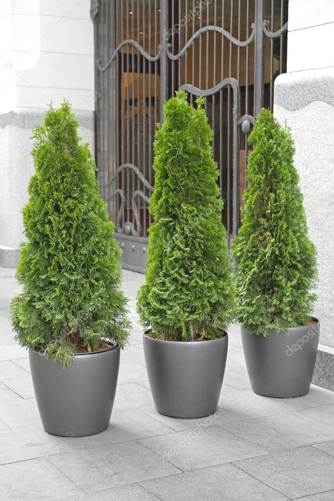 Trees In Pots Stock Photo