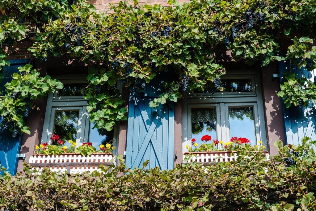 ländliche Fenster umrahmt von Wein — Stockfoto © franky242 #53327481