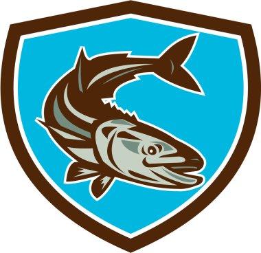 Cobia Fish Diving Down Shield Retro