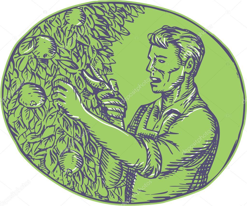 Pflaumenbäume Schneiden orchardist oval radierung pflaumenbaum schneiden stockvektor