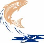 Losos ryby skákání voda izolovány