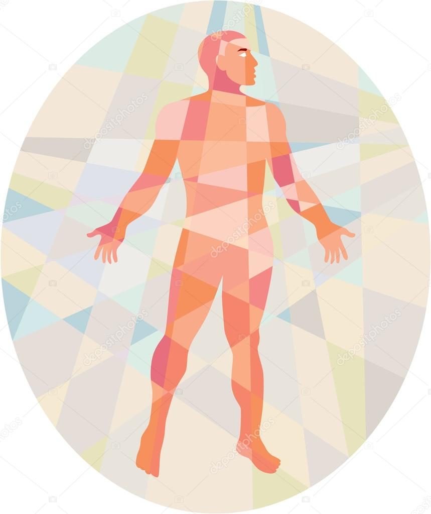 Gross Anatomy Male Oval Low Polygon Stock Vector Patrimonio