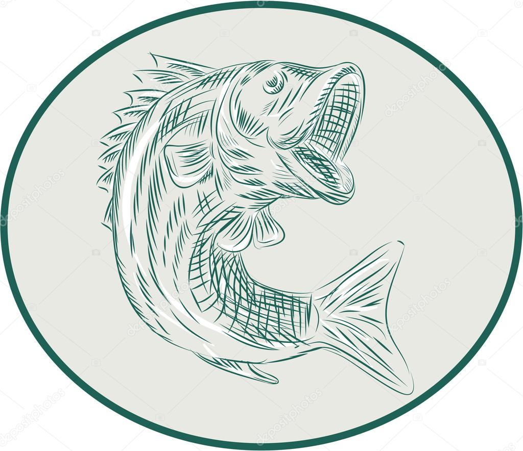 Largemouth Bass Fish Oval Etching Stock Vector Patrimonio 91990154