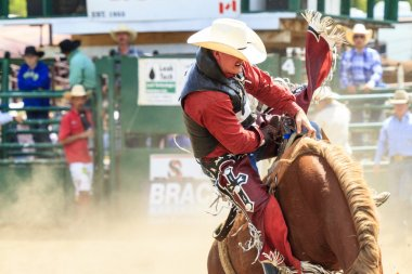 Rodeo   Bronco Riders
