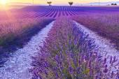 Krásný západ slunce levandule pole