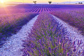 Fotografie Krásný západ slunce levandule pole