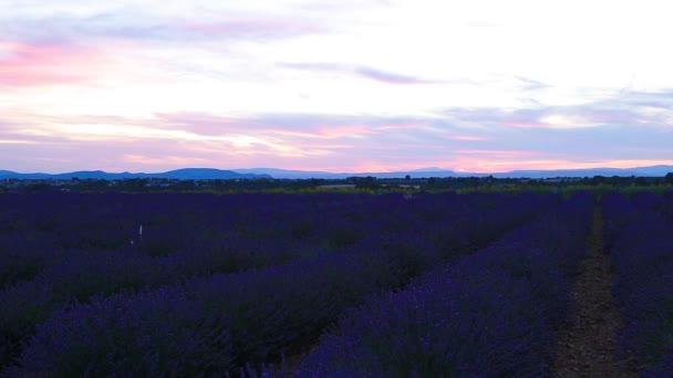 Levandulová pole v létě v Valensole