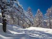 Paesaggio di inverno vicino centro sciistico Vogel nelle montagne delle Alpi Julian
