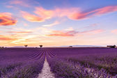 Fotografie Levandulová pole letní slunce krajina v Provence