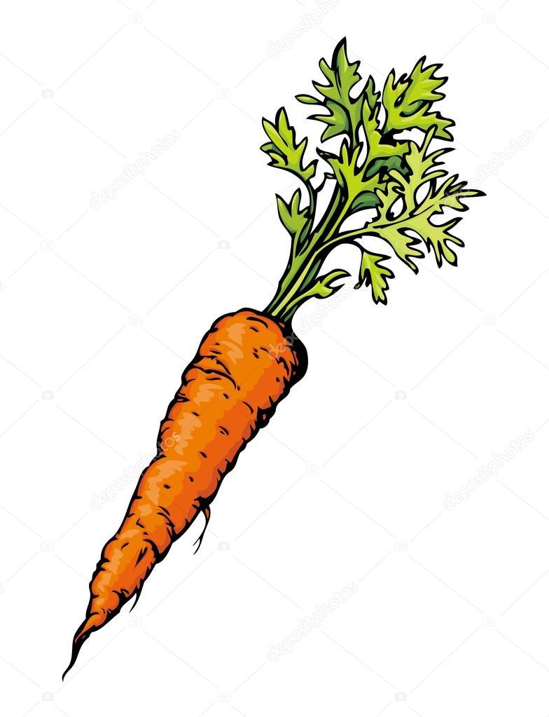 Jus de carotte dessin vectoriel image vectorielle - Dessin de carotte ...
