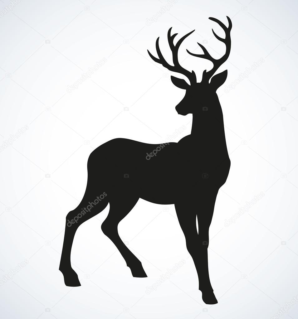 Image De Art Deer And Drawing: Jeune Chevreuil Bois. Dessin Vectoriel