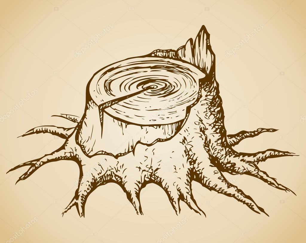 Old tree stump. Vector sketch