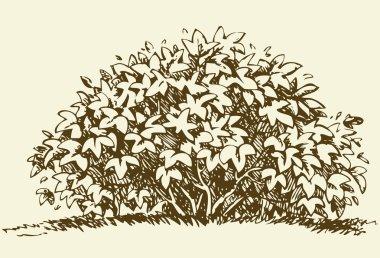 Big bush. Vector sketch