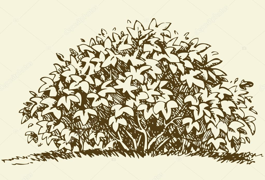 Big bush. Vector sketch