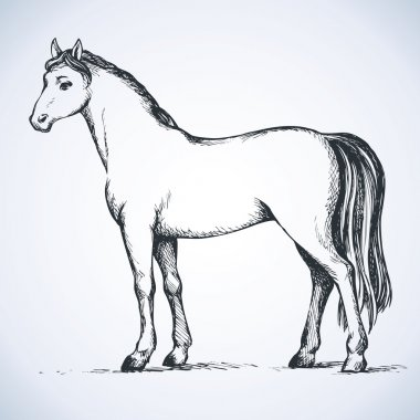 Elegant white horse. Vector drawing