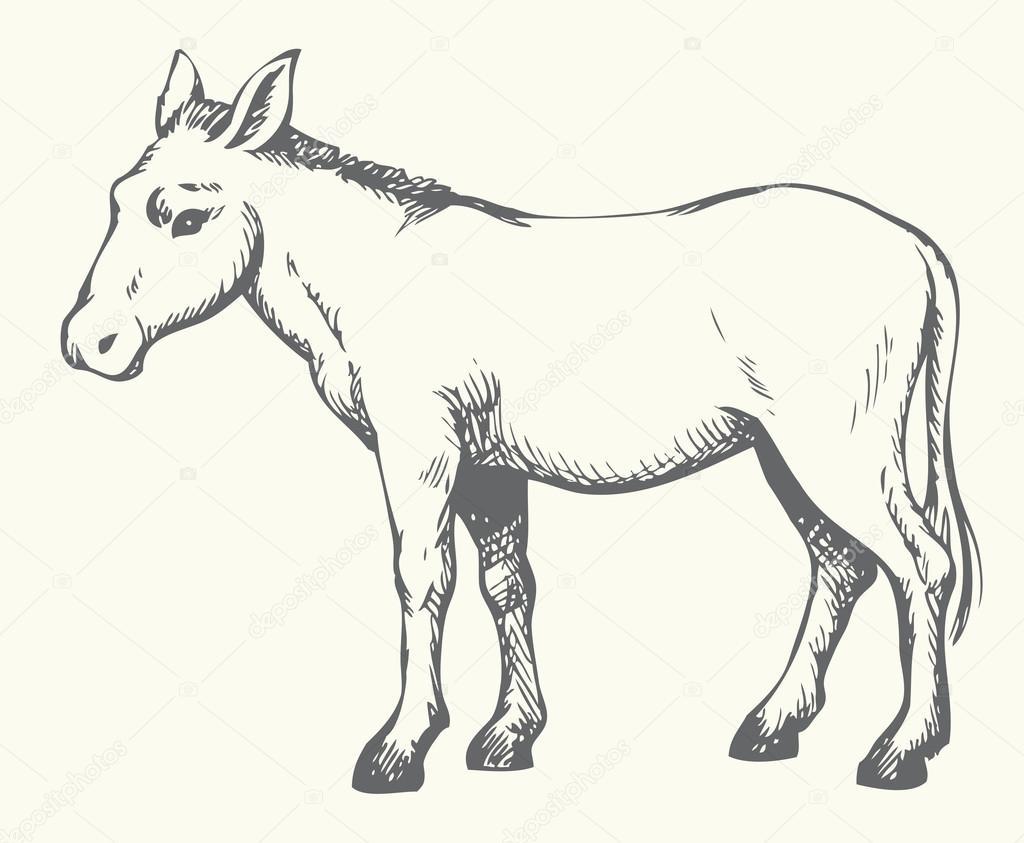 Donkey  Vector drawing — Stock Vector © Marinka #68786893