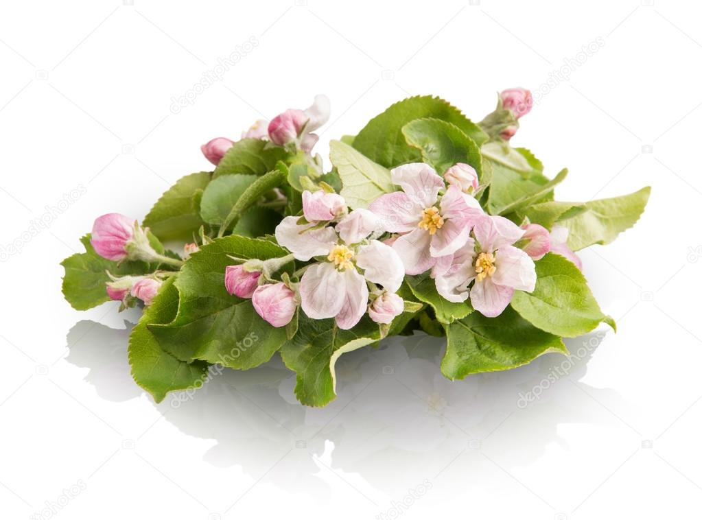 Sprig with pink flowers isolated on white background