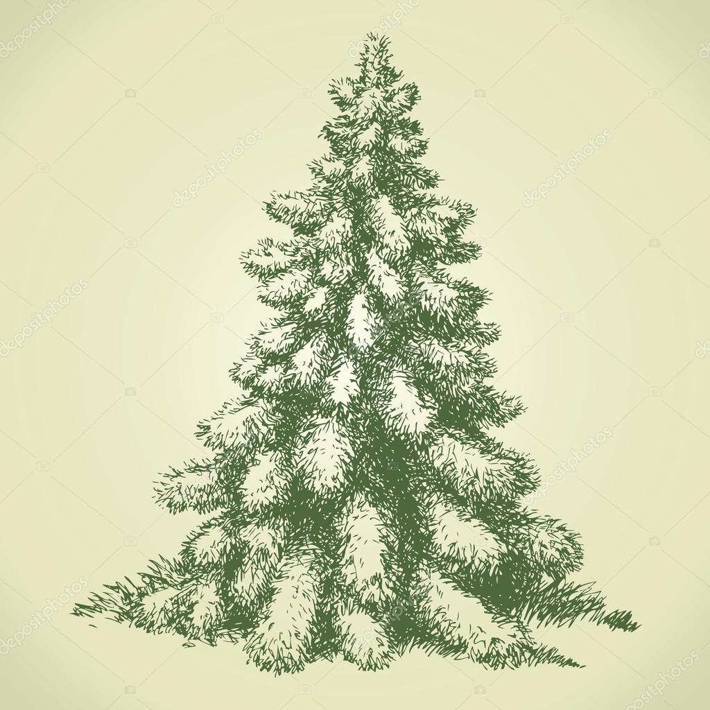 Fir in forest glade. Vector sketch