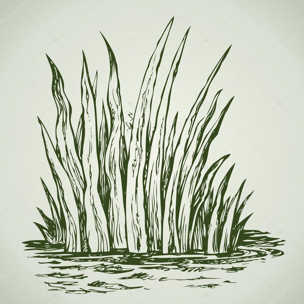 Green grass. Vector drawing